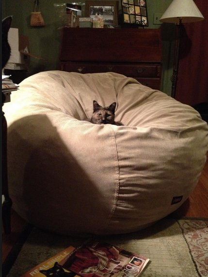 Miraculous Ramp Capital On Twitter Im Sure The Bean Bag Company Ncnpc Chair Design For Home Ncnpcorg