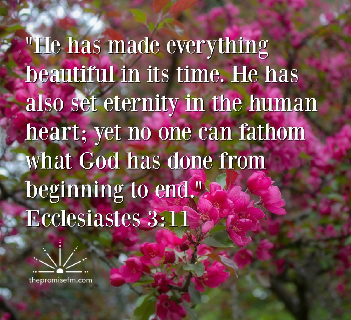 He Made Everything Beautiful In Its Time