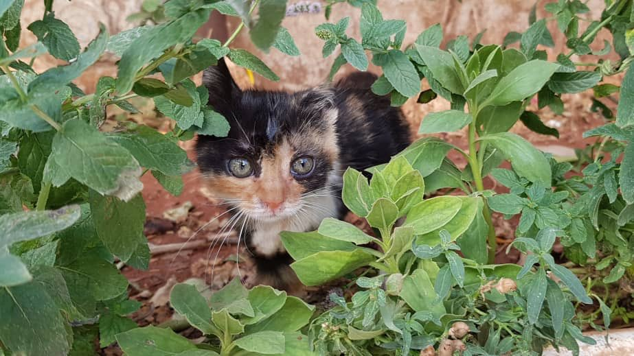 Ernesto's Sanctuary for Syrian Cats on Twitter: