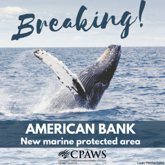 #BREAKING Just annouced creation of the American Bank #marineprotectedarea in Gaspé Peninsula. A concrete step for the protection of our marine environment! @Isamelancon @DLeBlancNB @DiLebouthillier @phcouillard @FishOceansCAN @MDDELCC @JDAmourofficiel   http:// cpaws.org/news/new-marin e-protected-area-in-the-gaspe-peninsula &nbsp; … <br>http://pic.twitter.com/Q7lO2VDZhQ