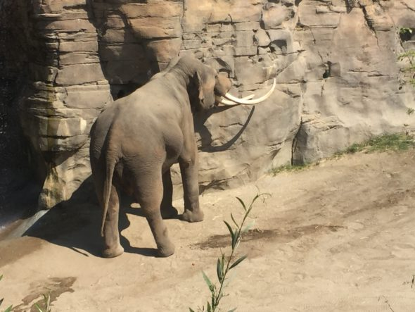 let the zoo elephants go Lyric inspiration from friends of woodland park zoo elephants hark hear packy and his herd weep metro council is asleep such great creatures nature made were not born to be displayed let them go tired and weary.