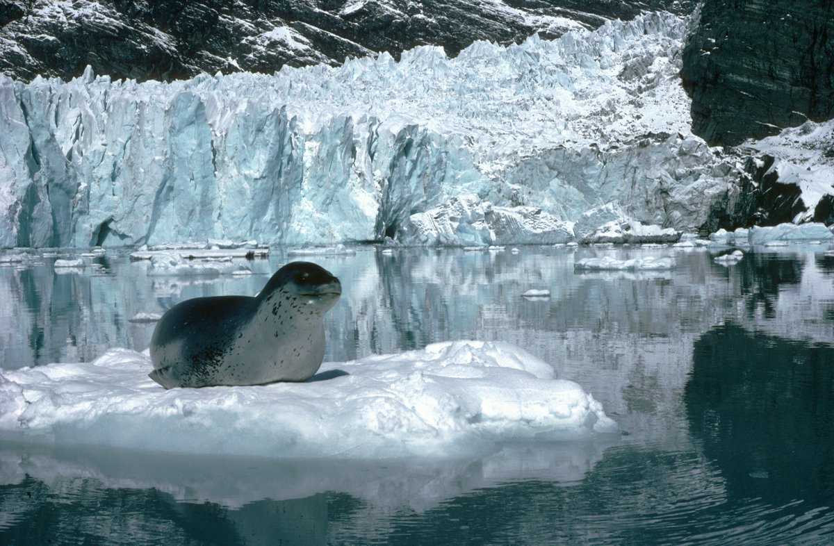 How Does A Leopard Seal Change Its