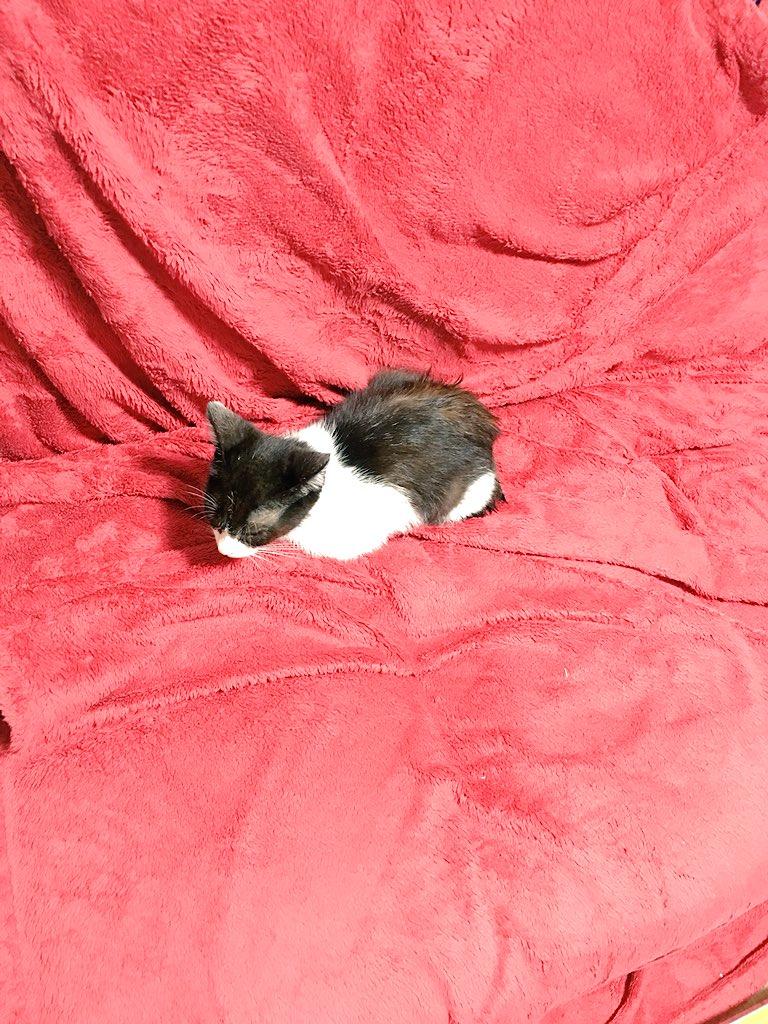 拾った猫さんは野良猫ではなく、迷い猫でした。 さっき飼い主さんのもとへ送り届けてきたっす。。  これで猫さんもきっと幸せなんやろうけど、、、 なんなんや。この寂しさは。 家の空気が薄い。。  ねこーー!!!!!!!!