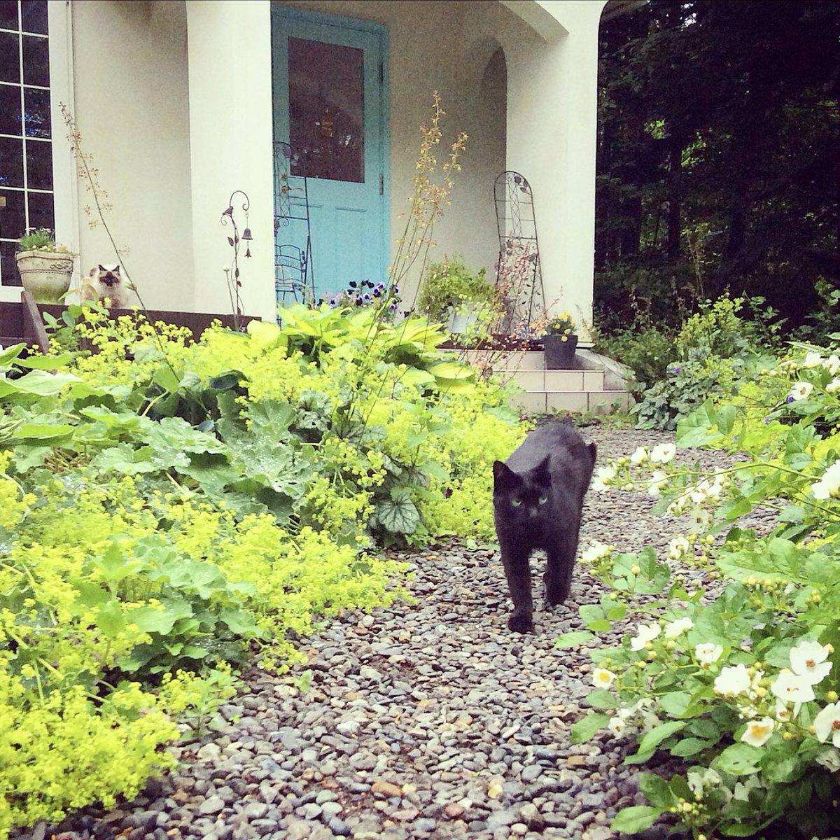 久しぶりのお天気でした。久しぶりにお庭でお昼寝して、遊んで、長い時間を過ごした猫たち。特にビビはとてもとても嬉しそうでした。 (ノ*φдφ)ノたくさんたくさんお外をはしりましたっ!!