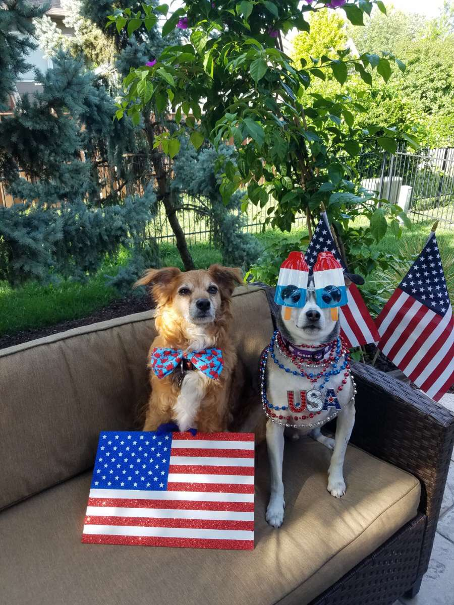 GUS's photo on #AllAmericanPetPhotoDay