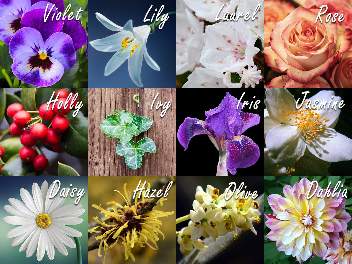 Blooms today on twitter such a beautiful name for a flower for such a beautiful name for a flower for you flower names can suite almost anyone from traditional exotic to feminine inspirational izmirmasajfo