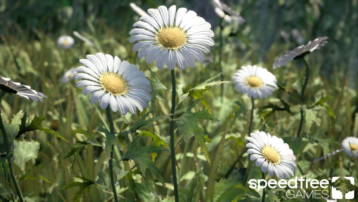 Speedtree on twitter start your day fresh like the latest addition while a daisy looks like a singular flower the yellow center is actually comprised of many smaller flowers called disc florets izmirmasajfo
