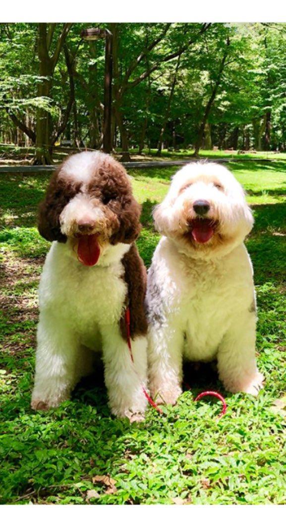 キムタク 犬 犬 種