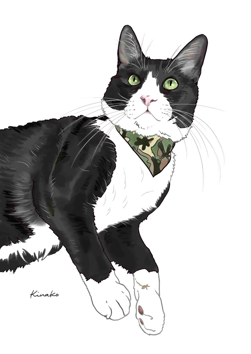 きなこ 猫の絵を描いています Su Twitter 8猫 さんの ハチワレのミミ君 14歳 昨年秋 腎不全と診断されました 心配な症状が出ると不安に 早く 食欲も出てきますように ステキなバンダナを巻いて 甘えるミミ君です 猫絵 Cat Drawing 猫イラスト
