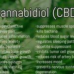 CBD has so many amazing benefits it may be something that can help you! 👇🌱  Shop Now 🌱https://t.co/tbWDsmyudY  #CBDOil #CBD #HempOil #HempOilExtract #Vape #Vaping #Organic #USARaised #Colorado #California #Anxiety #Stress #Health #CBDBenefits #PainRelief #ShopNow