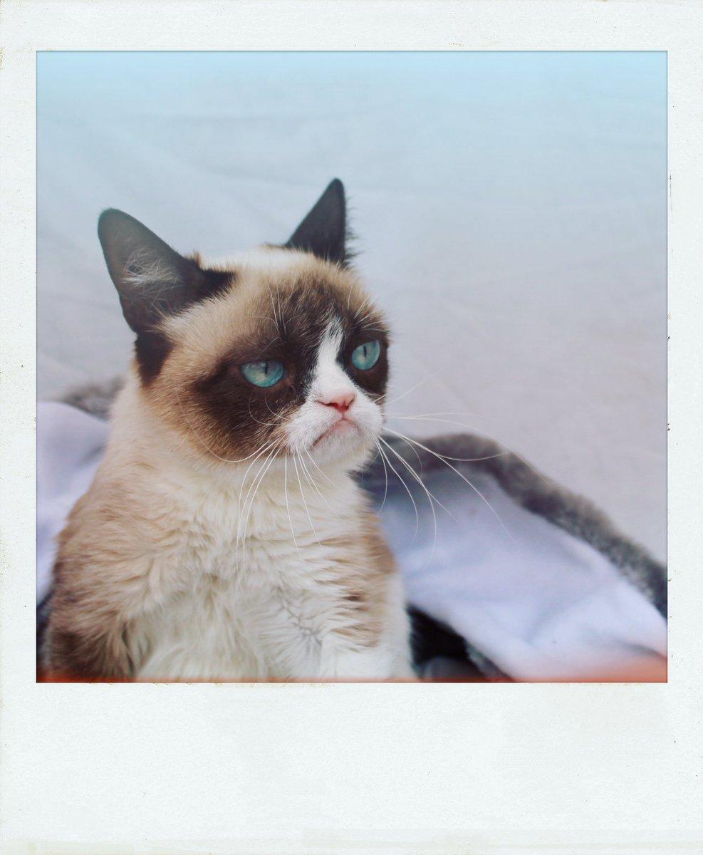 Grumpy Cat (@RealGrumpyCat) on Twitter photo 2018-07-12 20:45:20