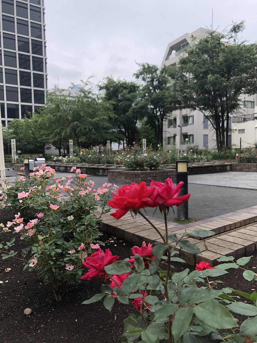 川島 智太郎's photo on 雨の音