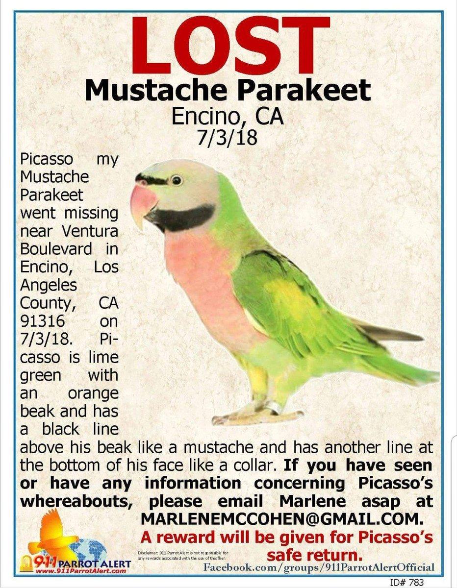 mustacheparakeet hashtag on Twitter