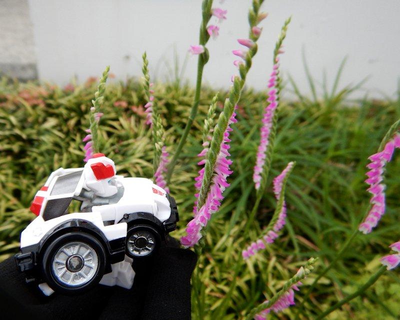 ネジバナです.ものすごい勢いでネジネジしています.こんな姿でも,ラン科の植物です.ネジネジ.おはようございます. #transformers
