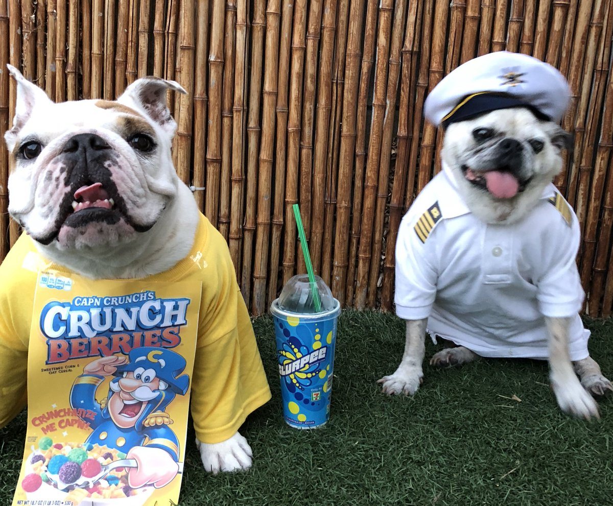 Welcome to #pugchat! Who is here and where are you from Loulou and Gipper are here celebrating #7ElevenDay and our free slurpee we live in Huntington Beach  <br>http://pic.twitter.com/YBoVOx4NCO
