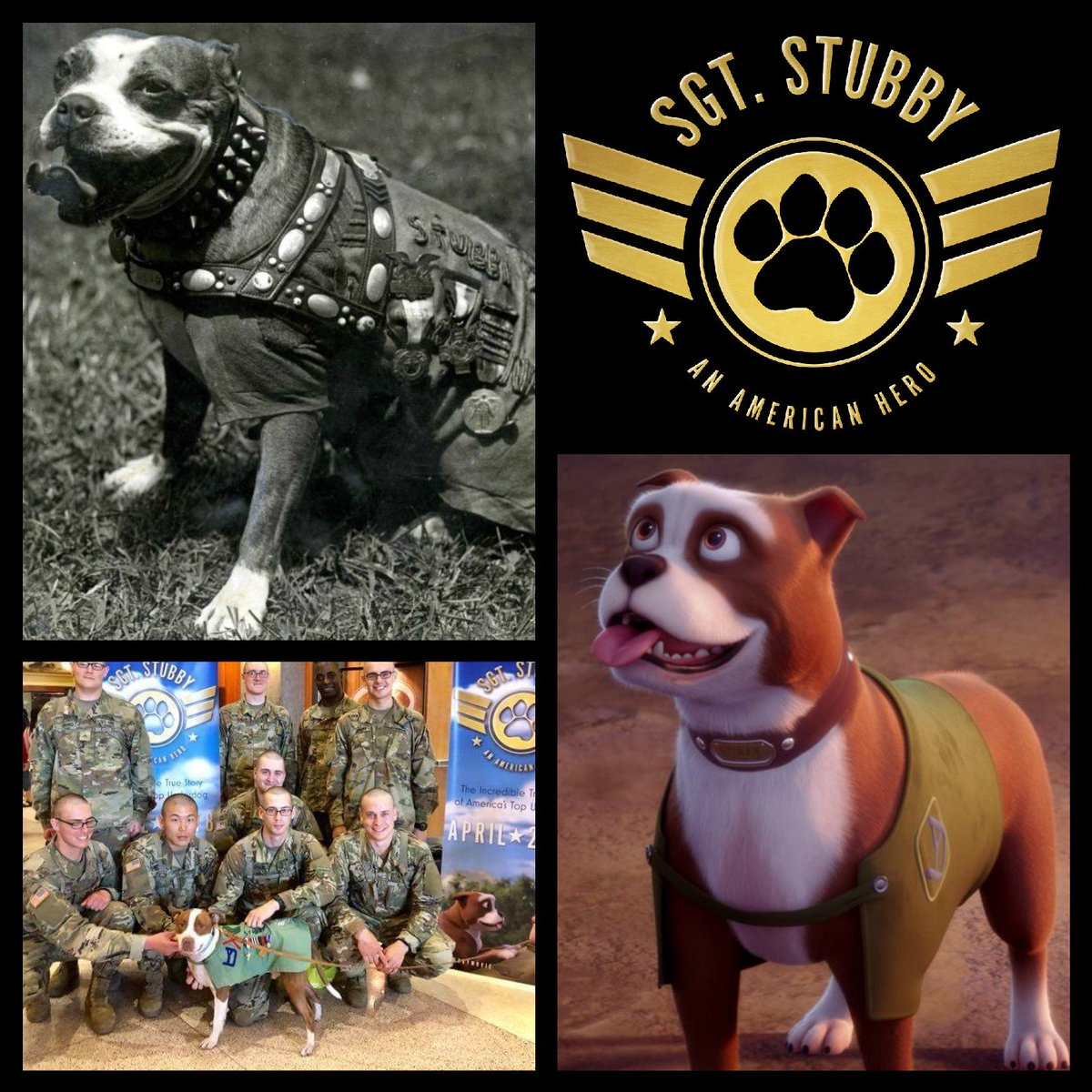 Sgt. Stubby's photo on #AllAmericanPetPhotoDay