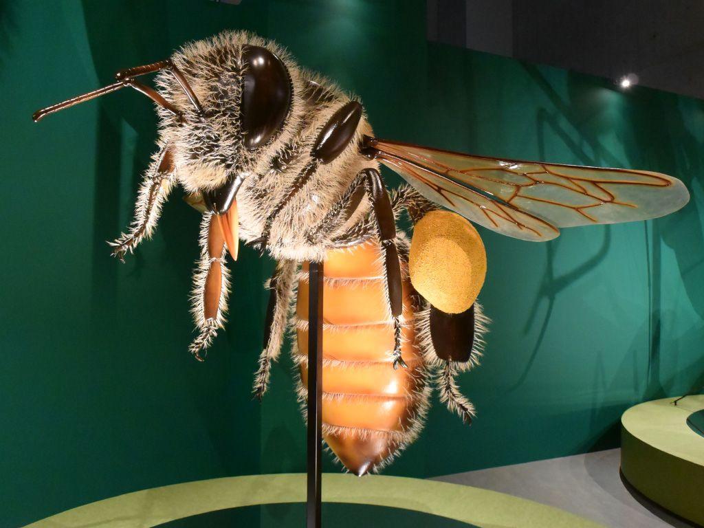 上野の国立科学博物館と言えば、コンピューターの展示でASCII読者にもおなじみの施設だが、この夏の特別展は昆虫! メディア向け内覧会が開催されたので見所をお伝えします! https://t.co/HajI7FQajB