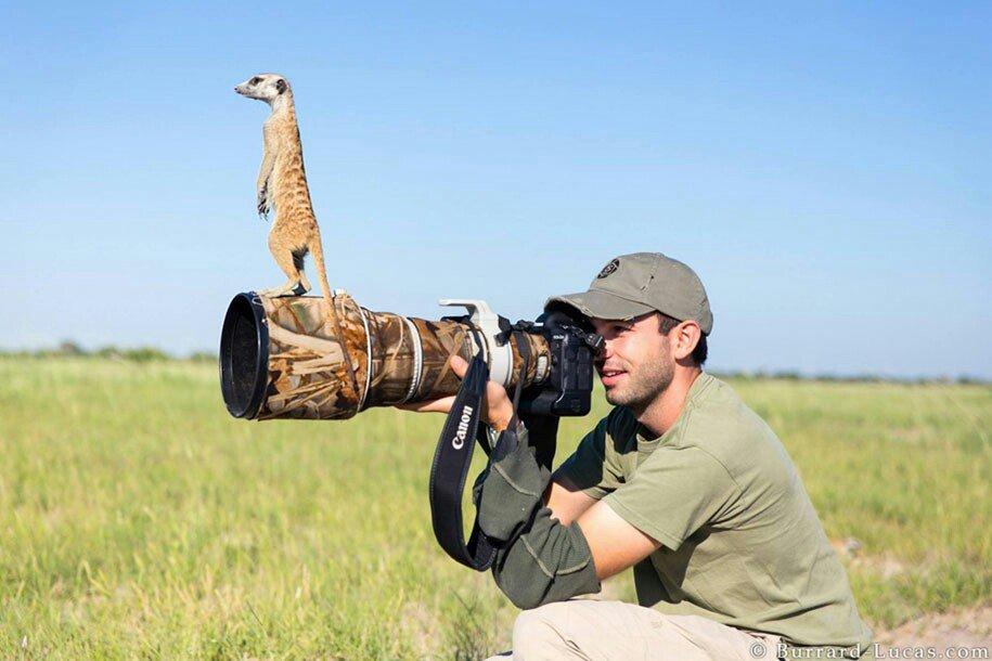 動物写真を撮りに行った写真家の、動物との距離が想定外になってる写真が好き