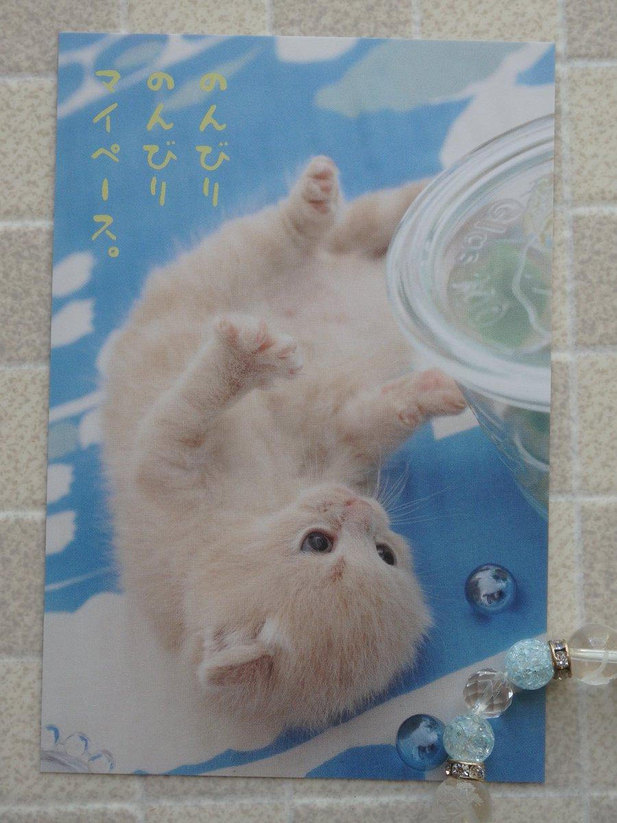 弟の写真のわんにゃんポストカード、またありました~ ACTIVE CORPORATIONさんから。 …もう暑中お見舞いの時期なのね。