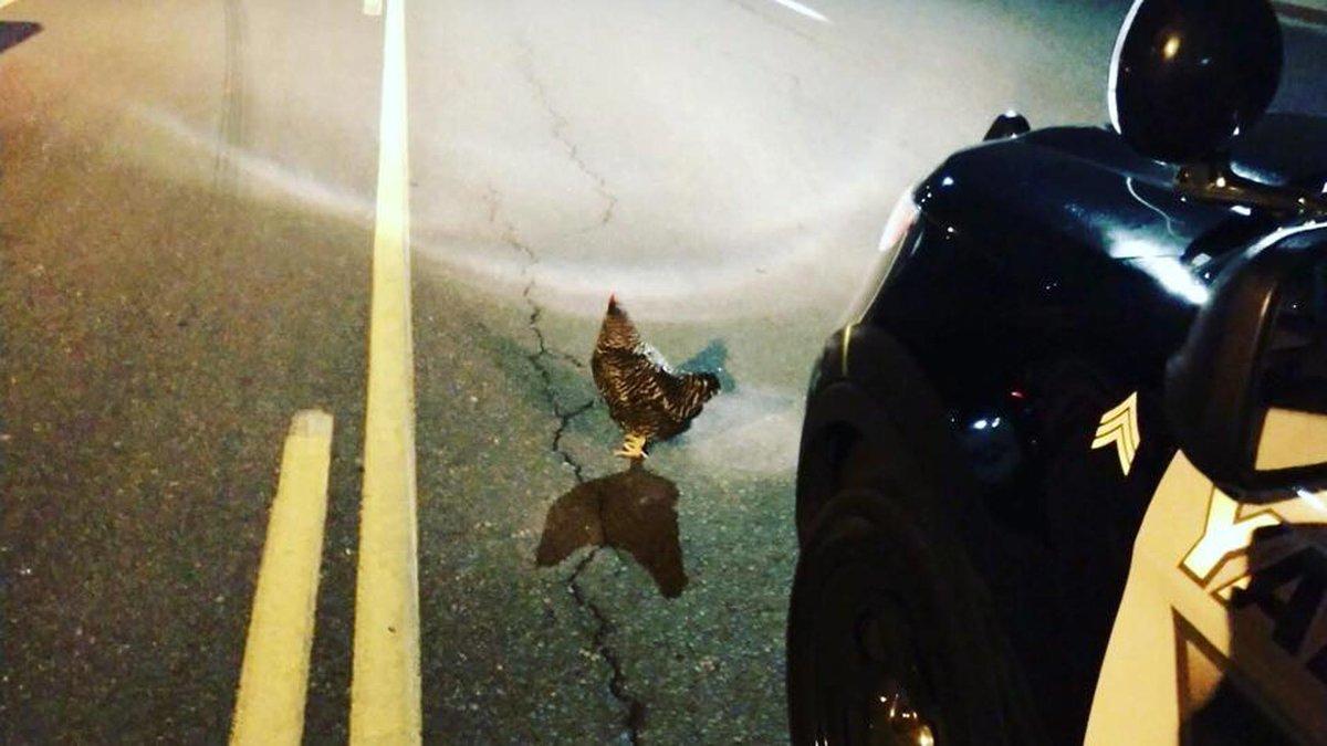 Policial 'ajuda' galinha a atravessar rua nos EUA https://t.co/p32mdU77CW #PlanetaBizarro #G1