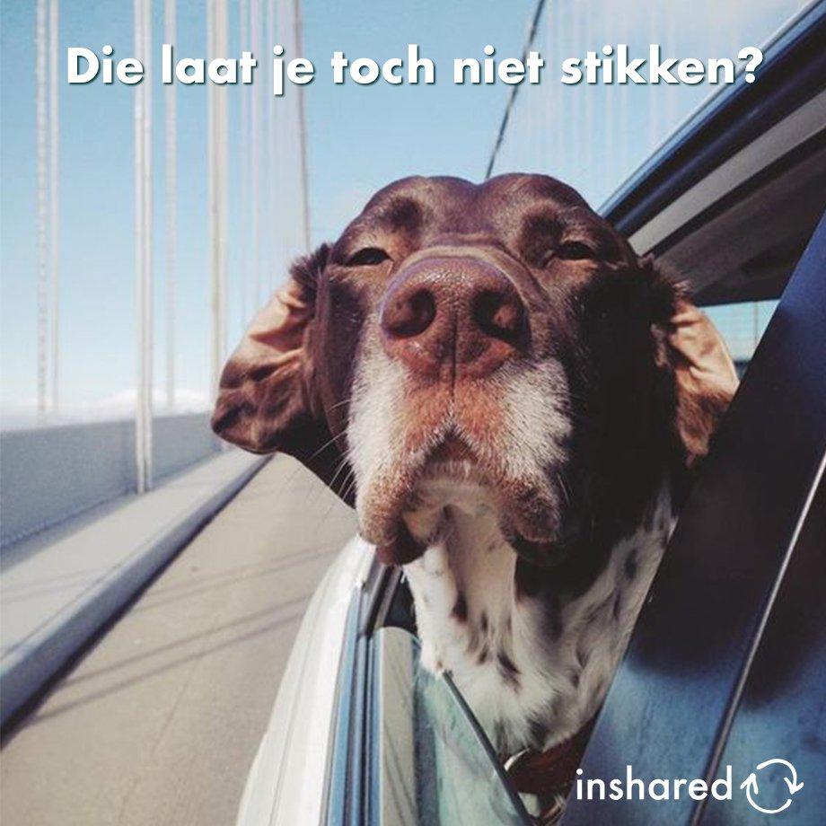 Elk jaar gebeurt het weer als de zon schijnt: mensen die hun hond in de auto laten zitten. Dat. Kan. Niet. Ook niet 'heel even maar'. Binnen 10 minuten is je auto 10(!) graden warmer dan buiten. En daar kan je hond dood aan gaan :-( #hondindeauto #dierenliefde #nietdoen https://t.co/9F57SkcGjV
