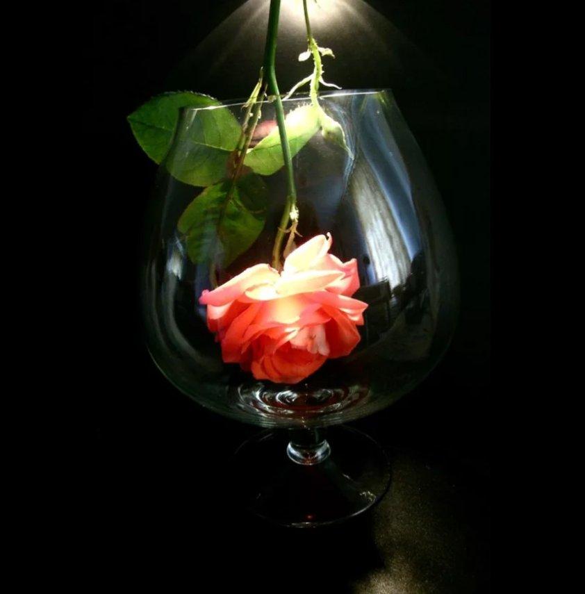 красивые картинки бокал с розой успехов работе часто