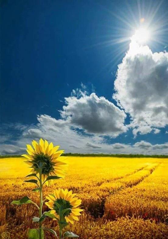 «Même la petite rosée fait prospérer le champ.»                  Christian Jacq