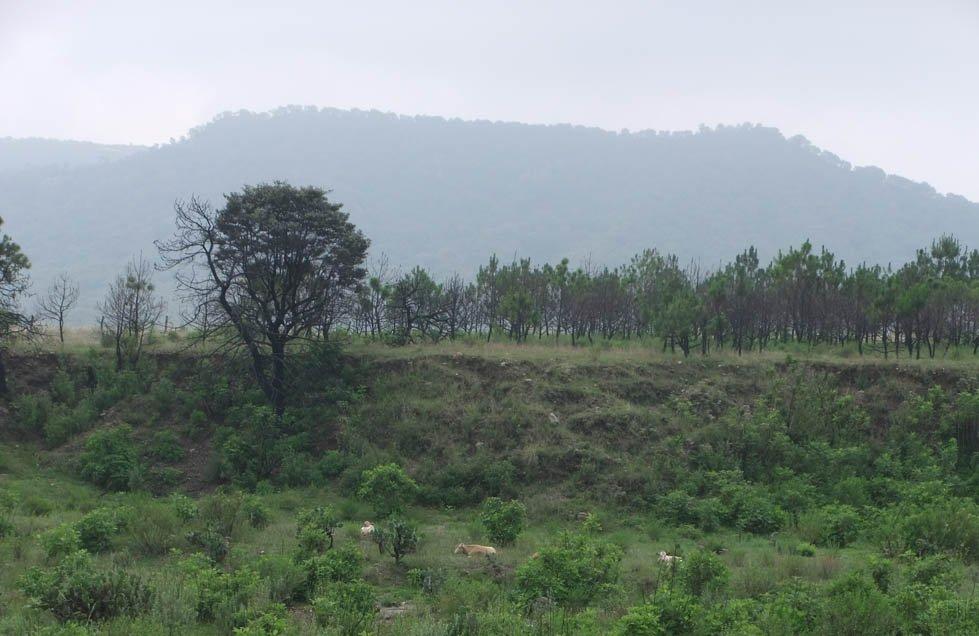 Si te lo perdiste: El decreto fallido y la protección a medias del bosque La Primavera https://t.co/S1X0W3O457 https://t.co/VmM9LS16VB