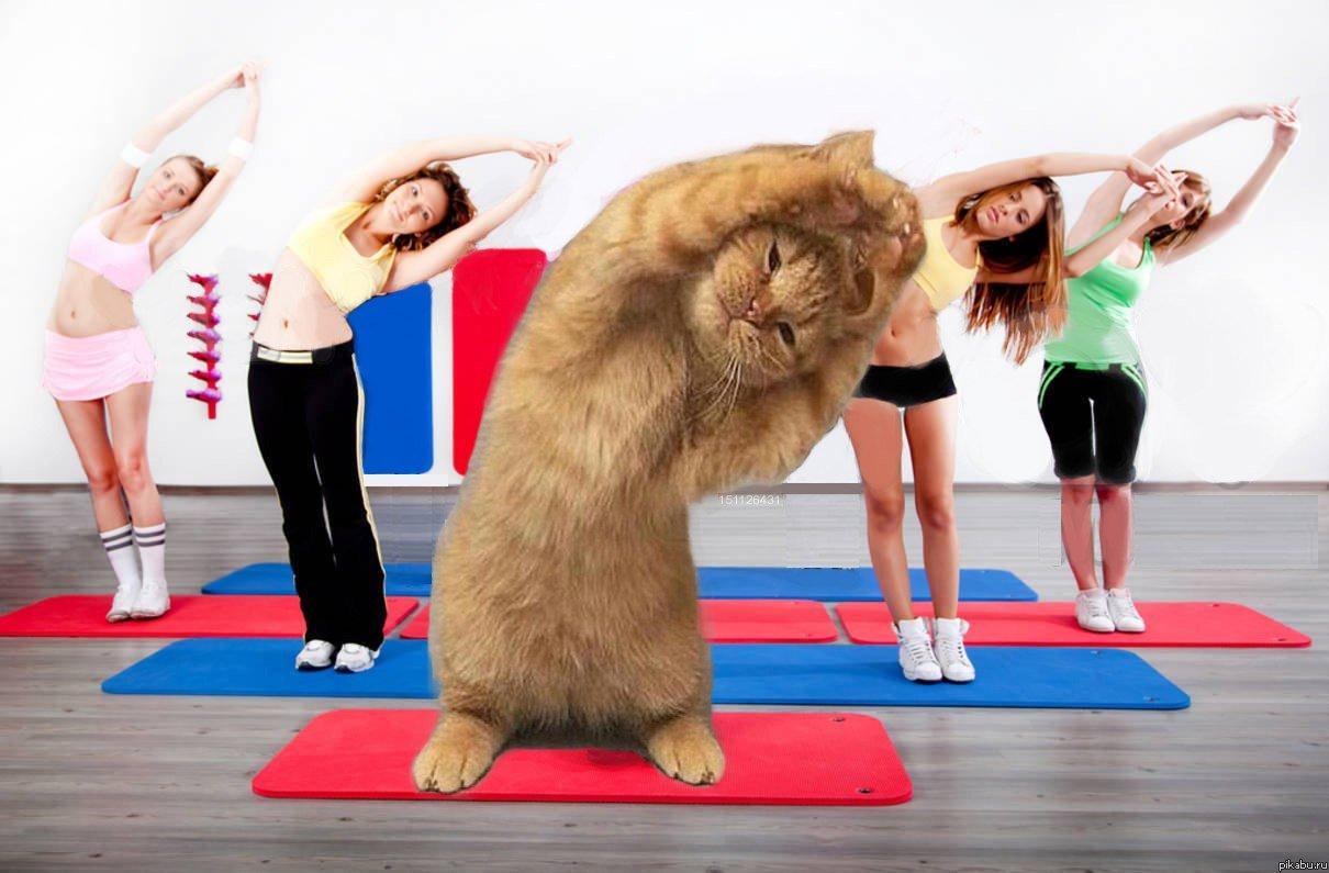 Мая, фитнес картинки приколы