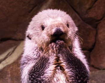 #WhenINeedAPickMeUp an adorable sea otter face works every time  <br>http://pic.twitter.com/LKcWNAOJYH