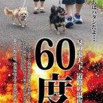 温度は60度!?炎天下の道路は鉄板の上と同じなので日中のペットの散歩は控えよう!