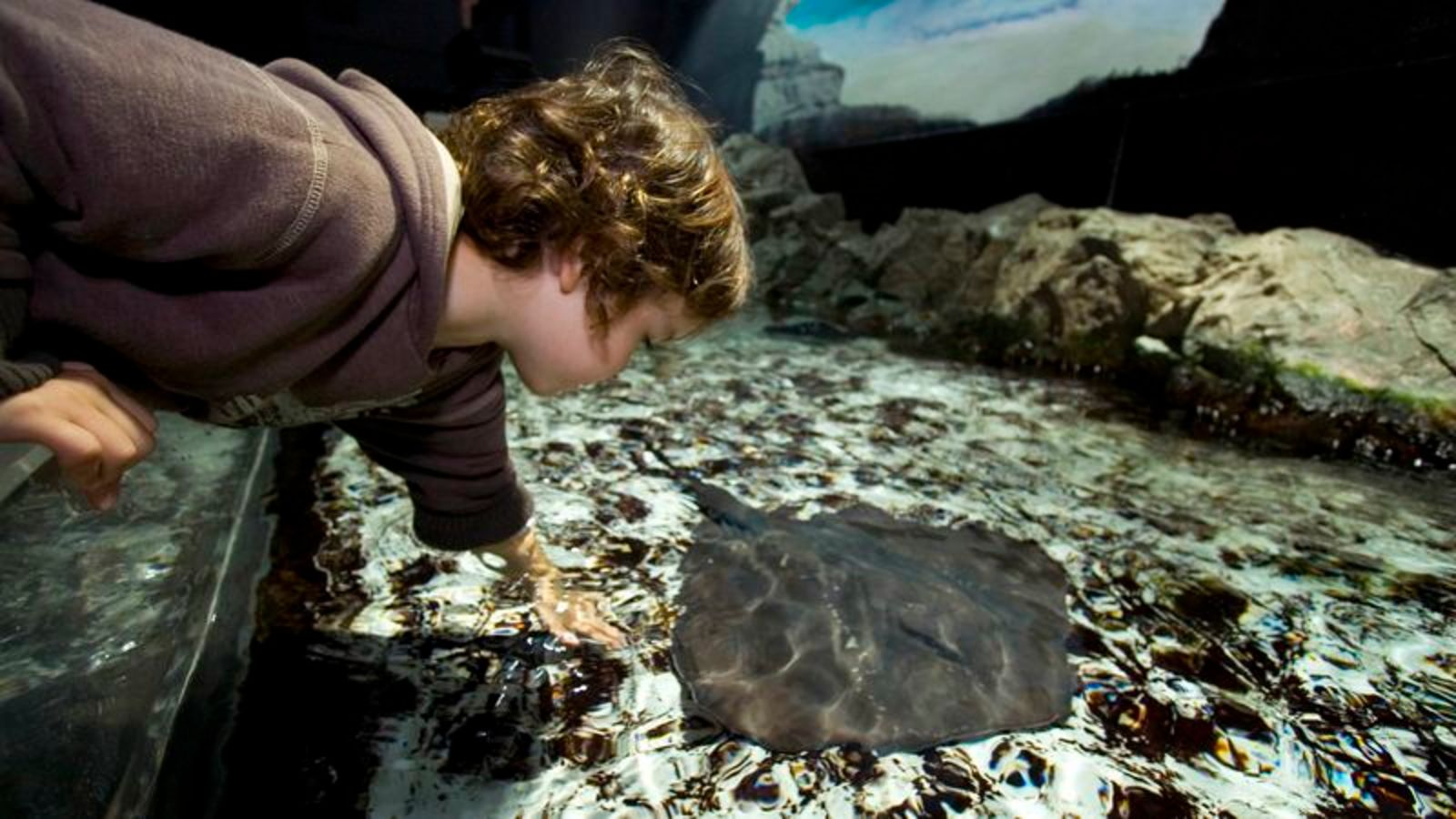 Stingray Loves When Aquarium Visitors Squeal And Recoil After Touching It https://t.co/jwz1zCHsYX https://t.co/aGyxLbClmp