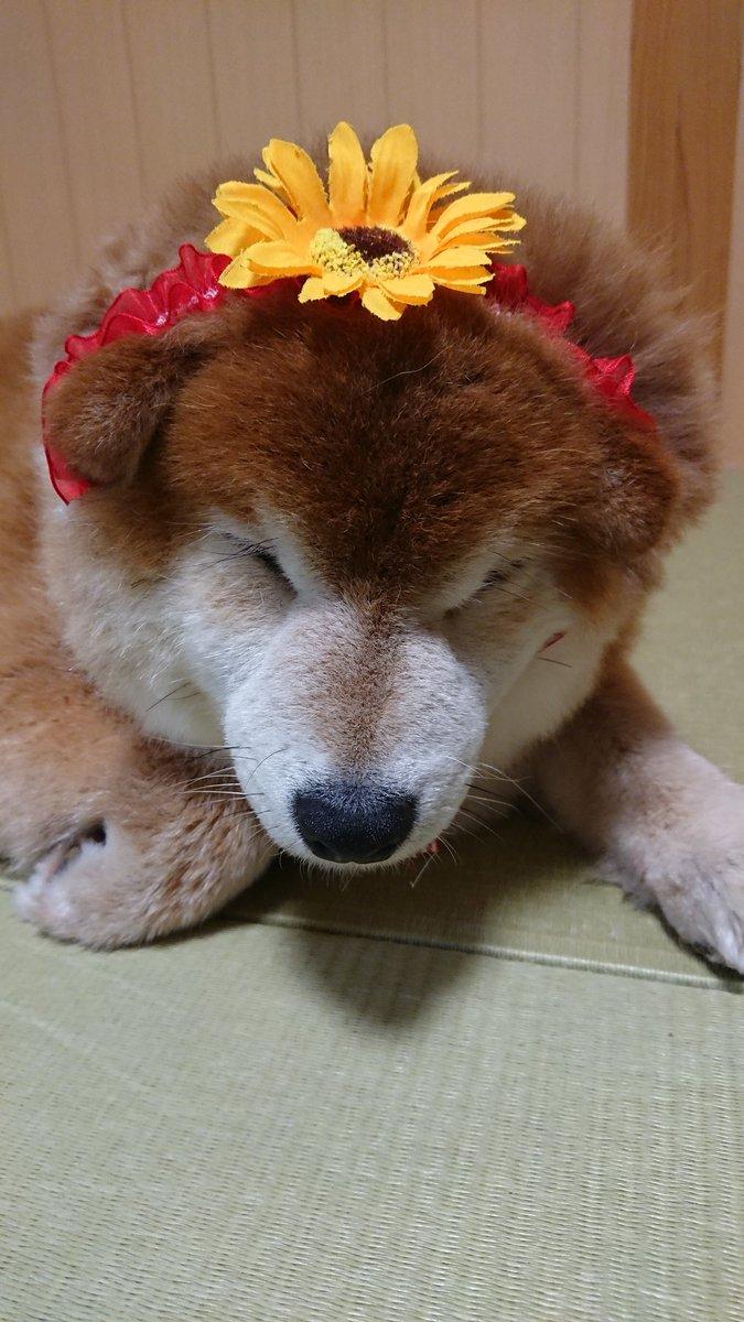 那須🍆でお誕生日を迎えましたv(o´ з`o)♪