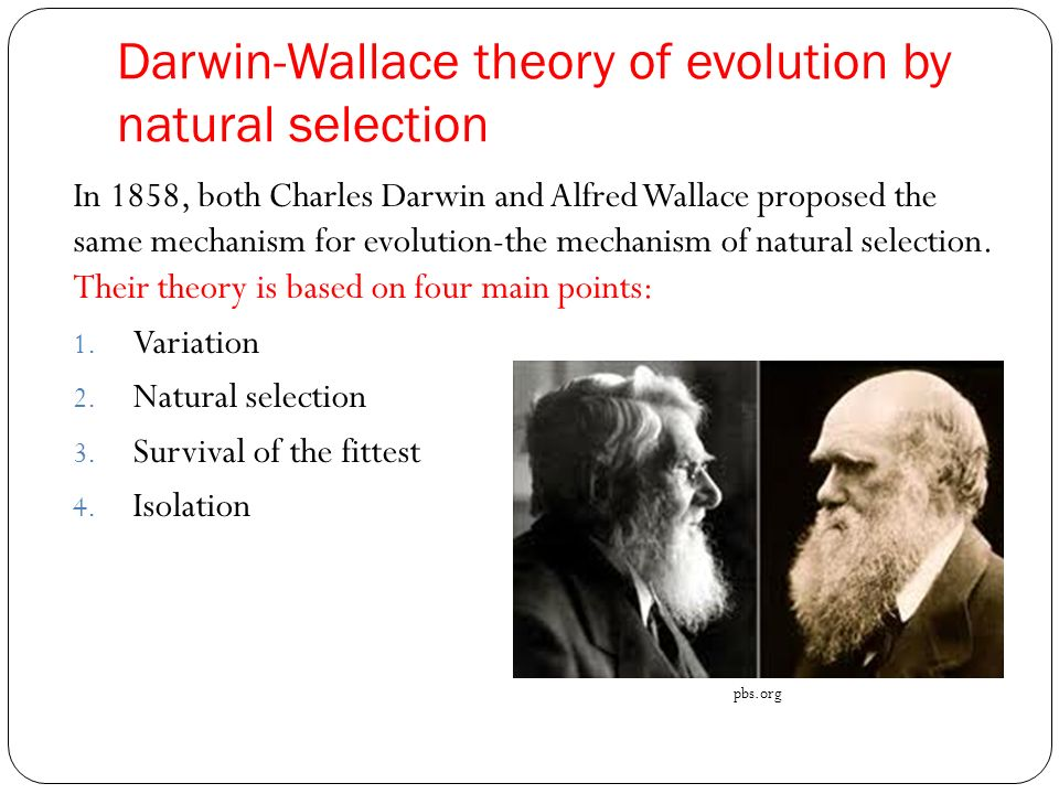 an introduction to the theories of evolution by charles darwin and alfred wallace Charles darwin was a british naturalist who proposed the theory of biological evolution by natural selection darwin defined evolution as descent with modification, the idea that species change over time, give rise to new species, and share a common ancestor.
