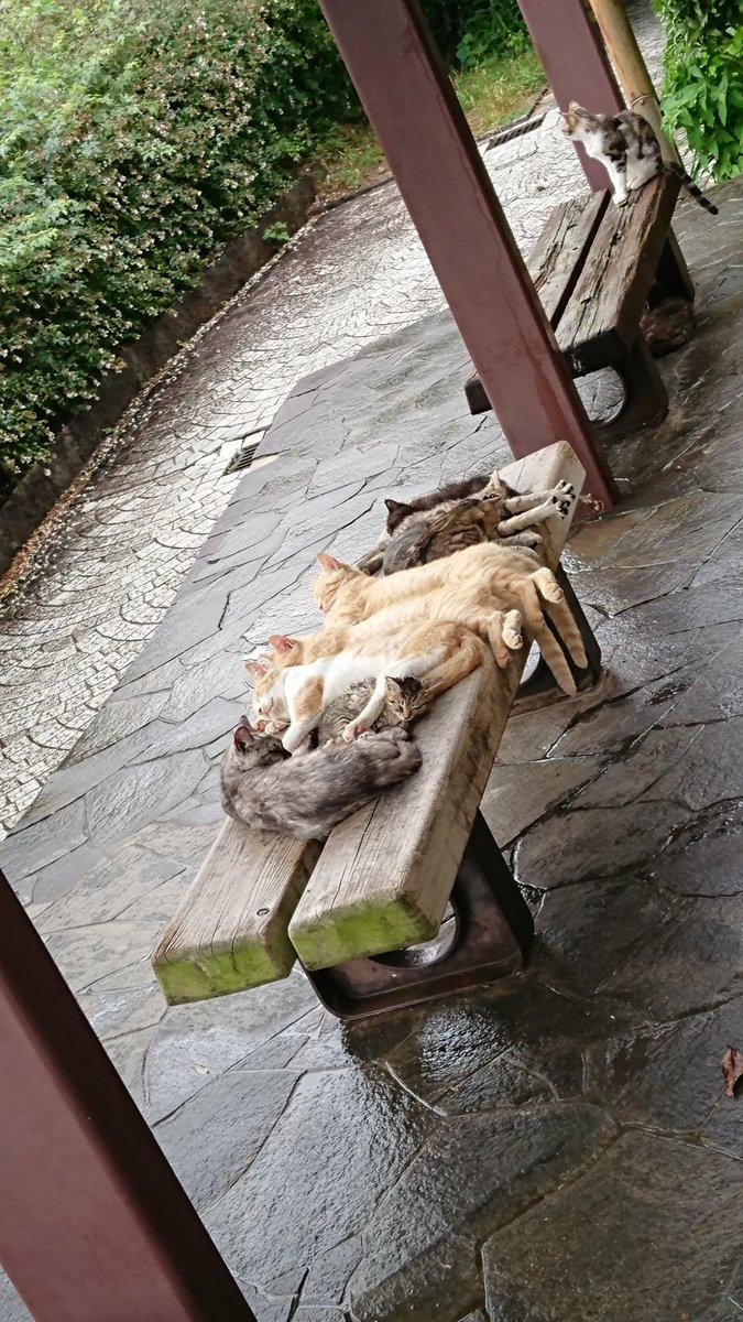 尾道でよく分からない写真撮れたんですよねww #猫 #尾道