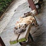 猫に大人気だなイスの上に野良猫がびっくりするぐらいたくさんいる