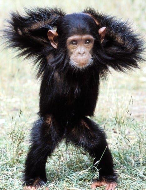 The best 10 days for a Uganda wildlife safari planned here to help you enjoy that dream safari. https://t.co/B1Iu5348jG #Ugandawildlifesafari #Ugandasafari #wildlifesafarisUganda #Ugandawildlifetour https://t.co/25zEsmXwqM