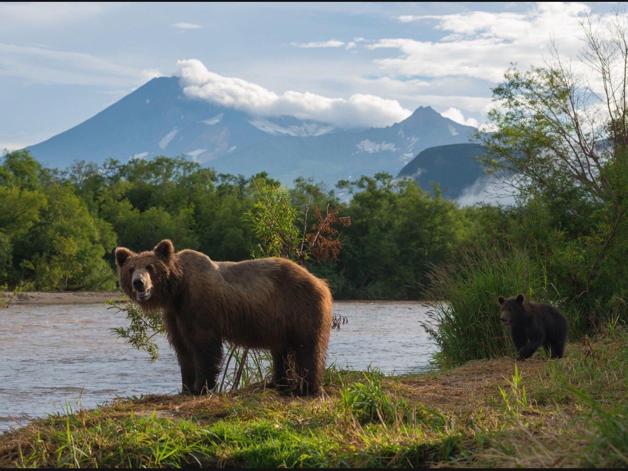 Медведь с совой фото этом