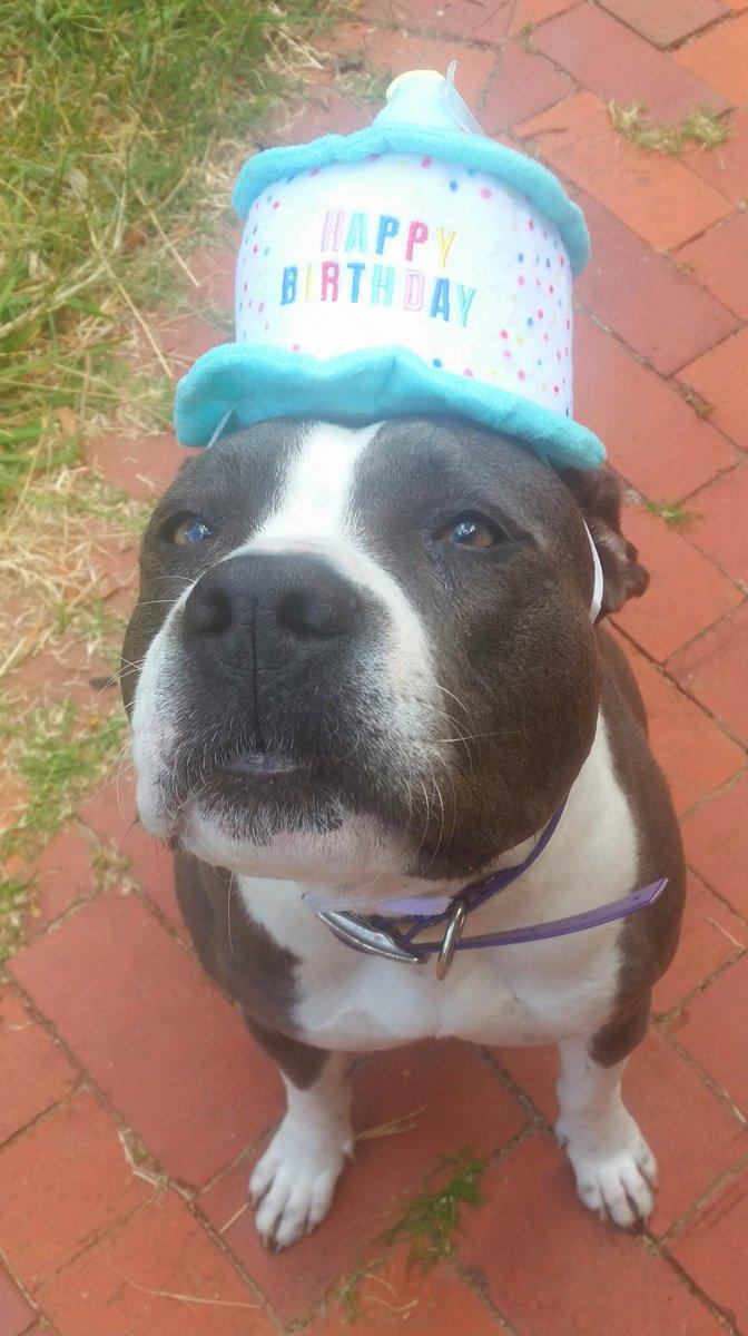 Birthday Wishes Happy Barb Animal Meme Wwwmiifotoscom
