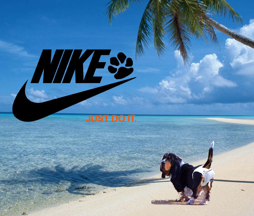 """#dogsoftwitter  Sorry this isn't #MocklerBasset #tiny #Tuesday  Ernest T. #style ,  This is #living #large """"Jack's Junk in the Trunk"""" !! #brand this @Nike <br>http://pic.twitter.com/1ruccdyJAF"""
