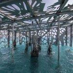 Image for the Tweet beginning: coralarium, world's first inter tidal
