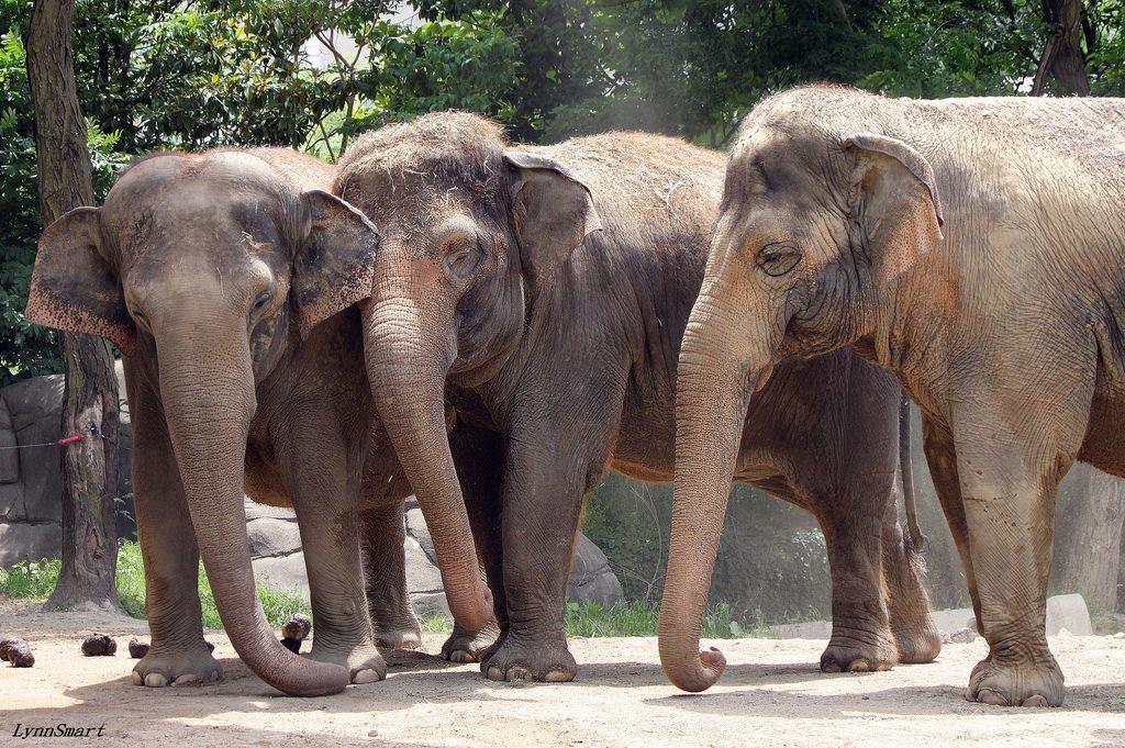 Cincinnati Zoo On Twitter Aww Jati Snuggles With Mai Thai