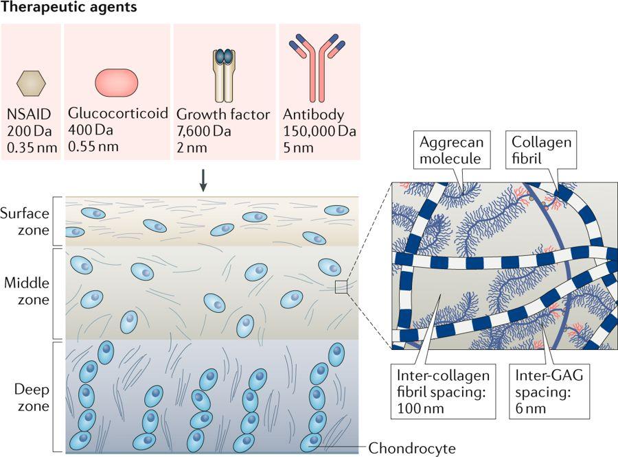 online biochemical mechanisms of detoxification in higher plants basis of