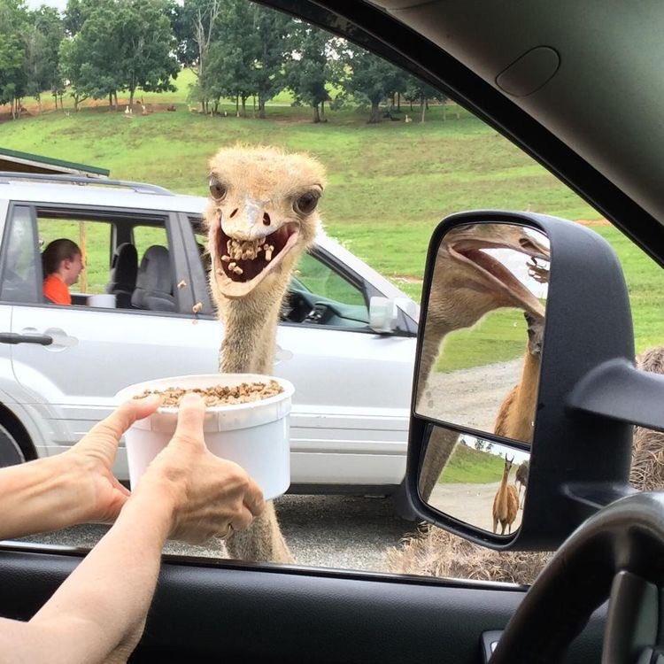 Safari In Va >> Your Favorite Place In Maryland Dc On Twitter Virginia Safari