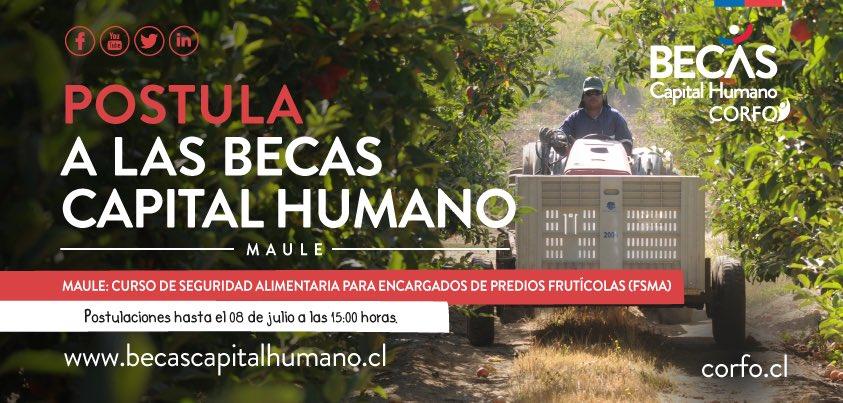 """#Maule Infórmate sobre el curso de capacitación """"Seguridad Alimentaria para Encargados de Predios Frutícolas""""  en #Linares y #Curicó de las #BecasCapitalHumano de #Corfo 👉 https://t.co/eyN4AtXdY7 🍑🍒🍓🍇 https://t.co/46GKGZPhf9"""