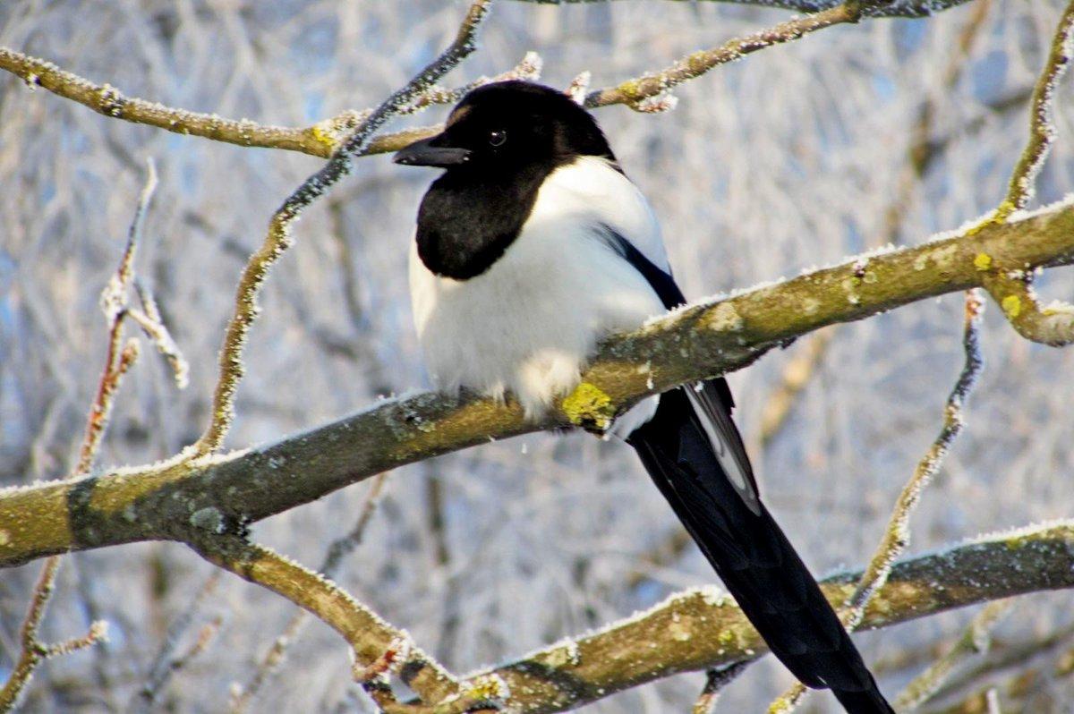 фото птиц обитающих в беларуси отличием