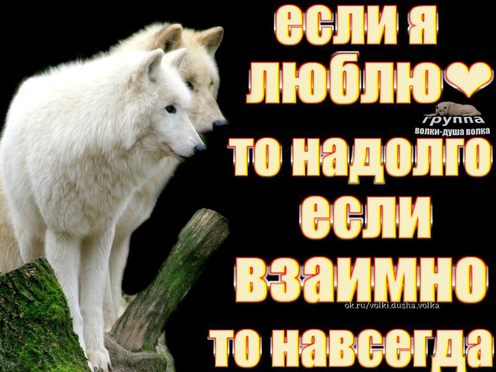 Душа волка открытка, надписями