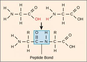 download lipids and