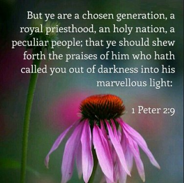 Image result for you are a chosen generation kjv