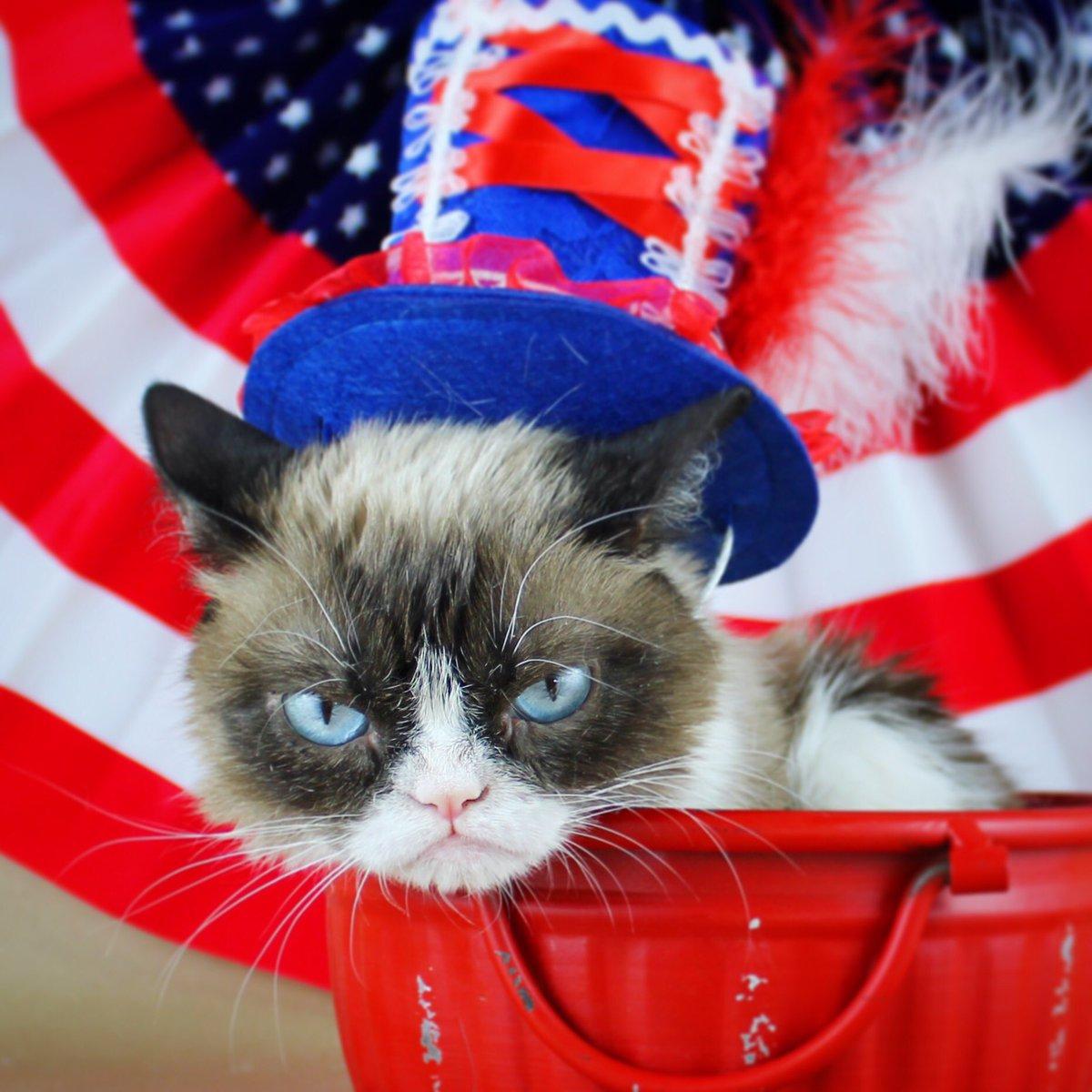 Grumpy Cat (@RealGrumpyCat) on Twitter photo 2018-07-05 02:02:45